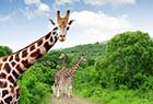 Escorted tours to South Africa