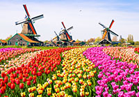 Dutch Bulbfields coach tours and cruises - spring holidays 2017