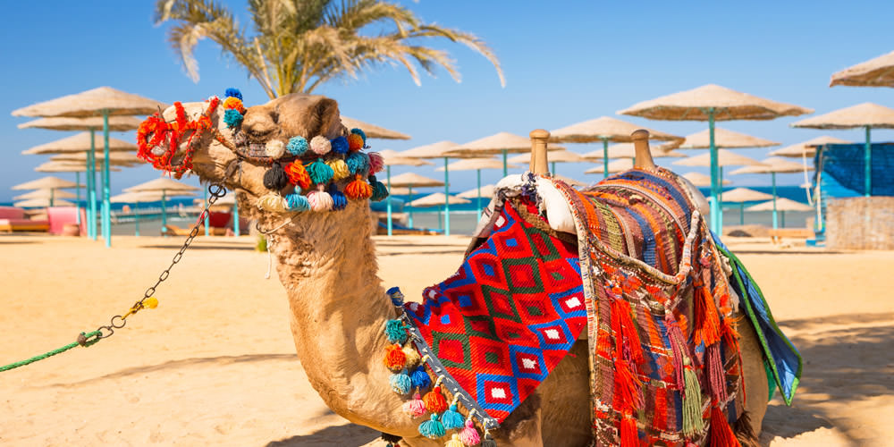 Top 12 Things To Do in Hurghada