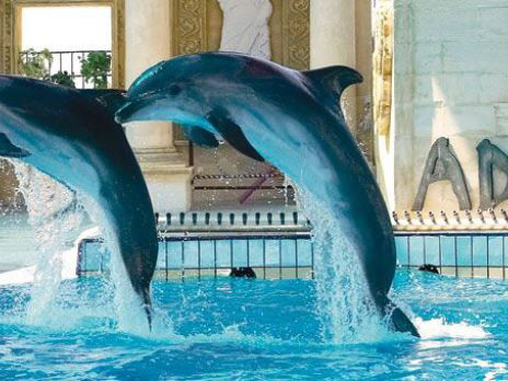 Dolphin show Kusadasi