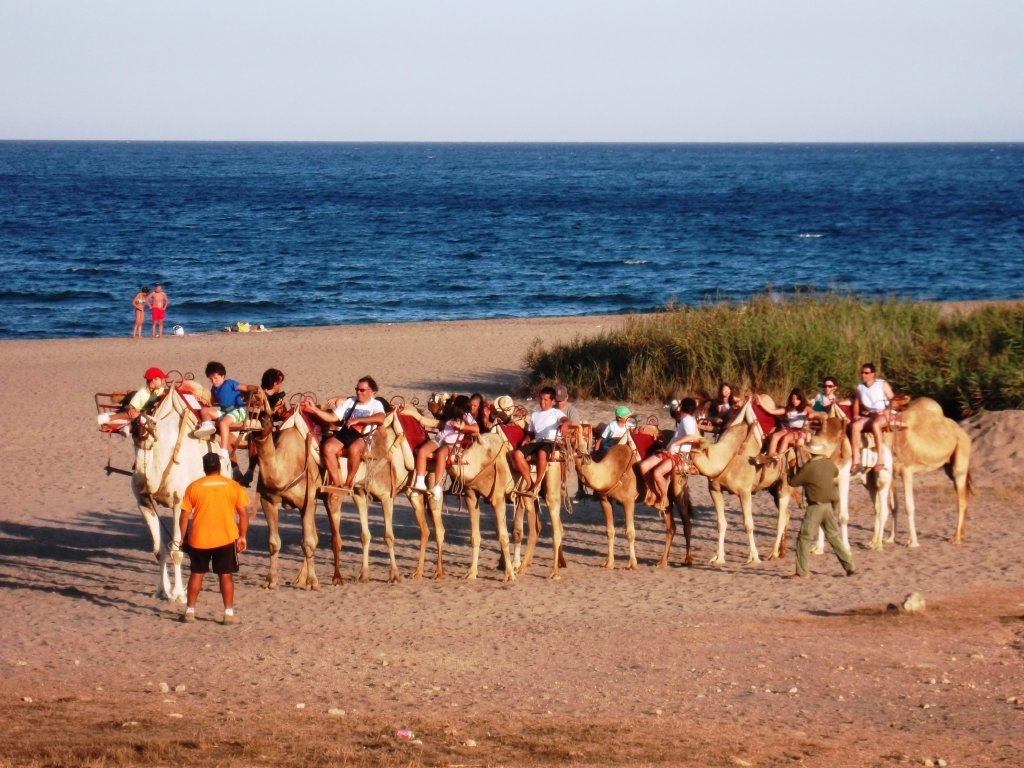 Camel rides in Mojacar