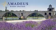 Amadeus- Avignon
