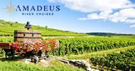 Amadeus - Cote de Beaune