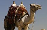 Egypt escorted tours