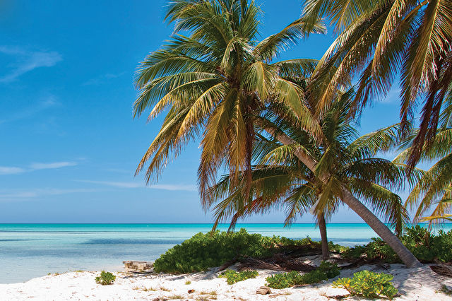 Western Caribbean Stay and Cruise
